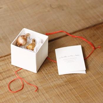 球根が入ったジュエリーボックスのような白くて可愛い小箱の雑貨