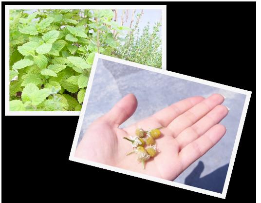 ガーデン雑貨の花の栽培キット